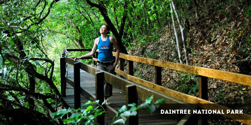 Daintree National Park - Best Places to Visit in Australia