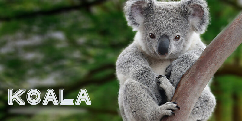 australias geographic isolation breeds unique flora and fauna The natural history of australia has been shaped by the have created the unique flora and fauna the geographic isolation of australia created a.