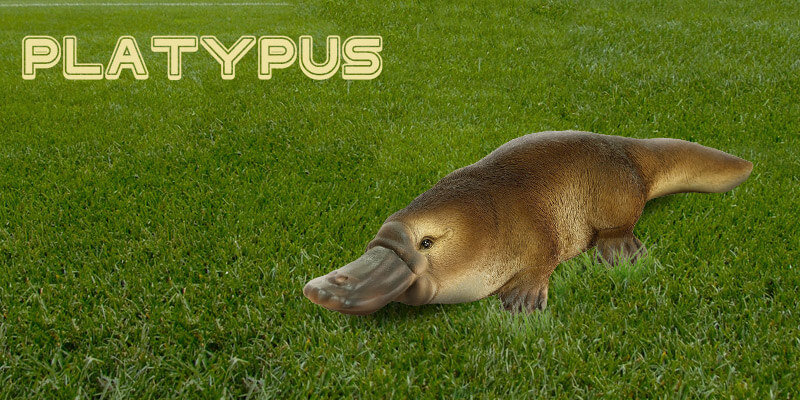an introduction to the rem sleep of the animal platypus The platypus is a bit like a fruitcake shove a bunch of leftover genes in there, mix  it up and send it to your relatives see what kind of animal you.