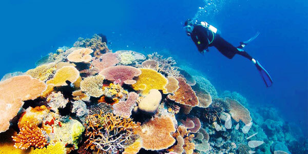Great barrier reef a natural wonder of world fun facts for Great pictures of the world