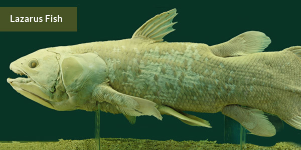 Lazarus Fish—Discovered after Extinction