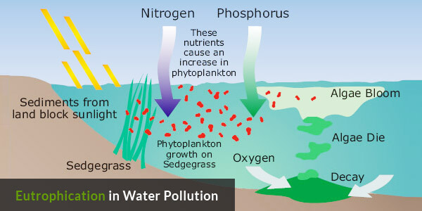 Water Pollution on Earth - Eutrophication